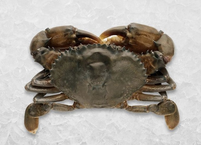 soft shell crab - for fried soft shell crab sandwich recipe